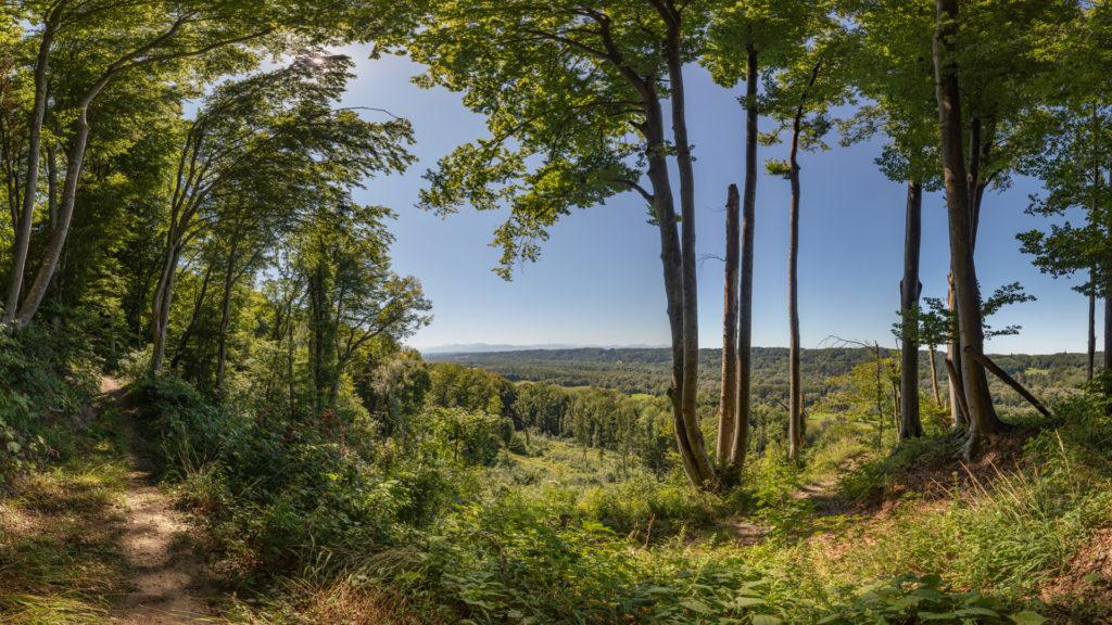 A_BR_St. Radegund_3_Aussicht im Wald (Dirschl Johann)